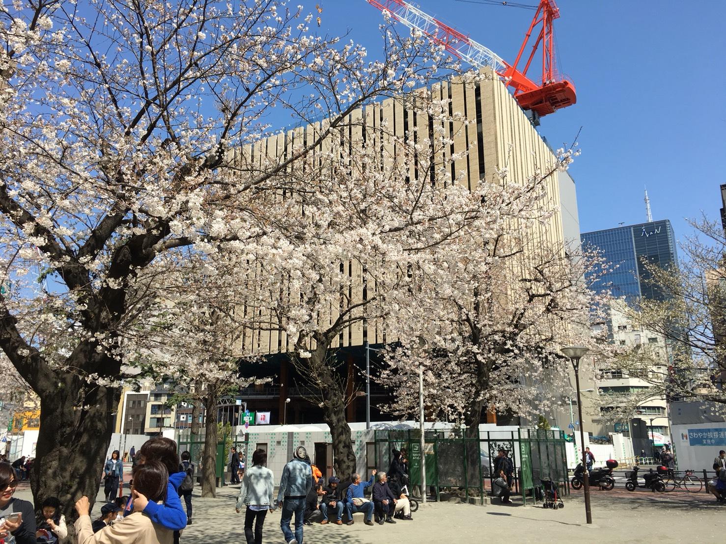 【池袋駅】春爛漫!桜を見に行こう!池袋東口の満開コースの中池袋公園2