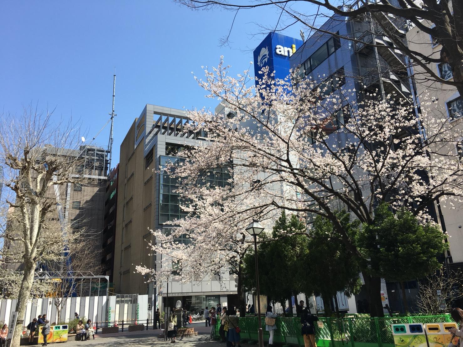 【池袋駅】春爛漫!桜を見に行こう!池袋東口の満開コースの中池袋公園3