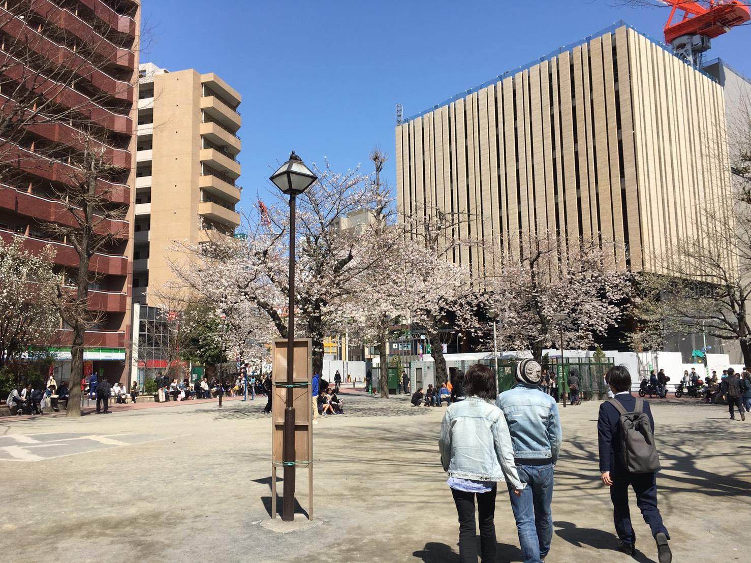 【池袋駅】春爛漫!桜を見に行こう!池袋東口の満開コースの中池袋公園1