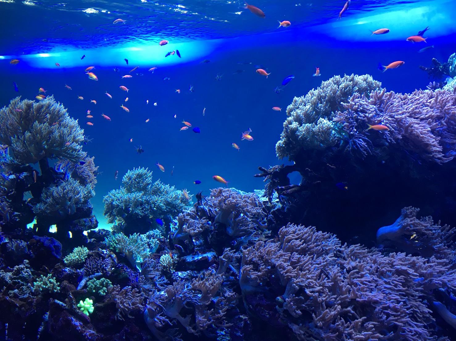 【池袋駅】「サンシャイン水族館」で癒されようよ!ほら早く!の水族館1