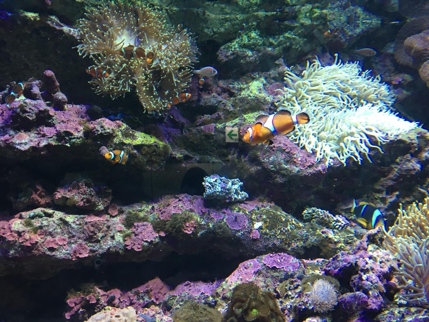 【池袋駅】「サンシャイン水族館」で癒されようよ!ほら早く!の水族館12