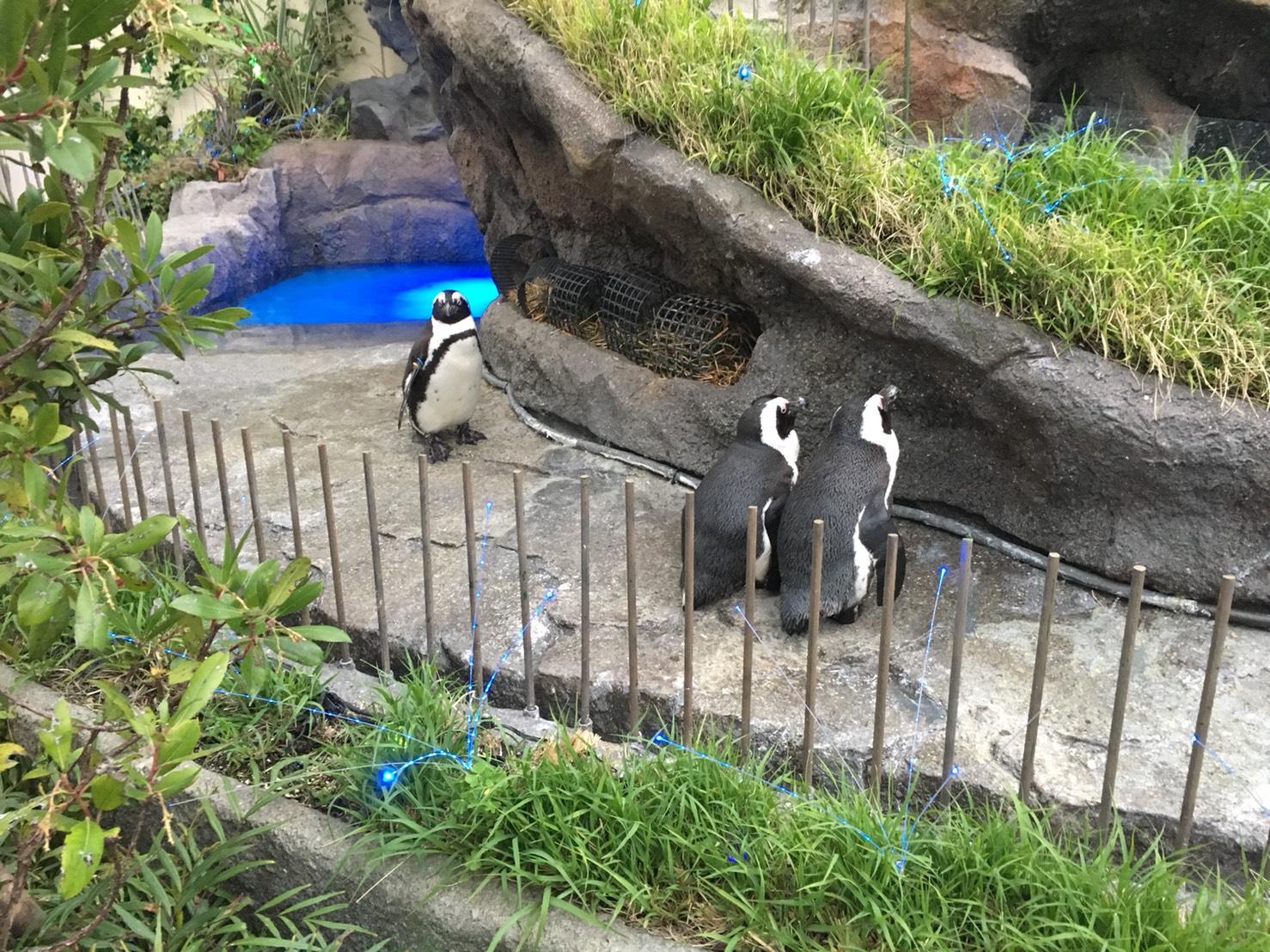 【池袋駅】「サンシャイン水族館」で癒されようよ!ほら早く!の空飛ぶペンギン3