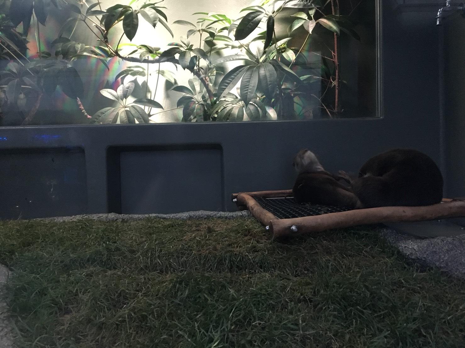 【池袋駅】「サンシャイン水族館」で癒されようよ!ほら早く!のコツメカワウソ2