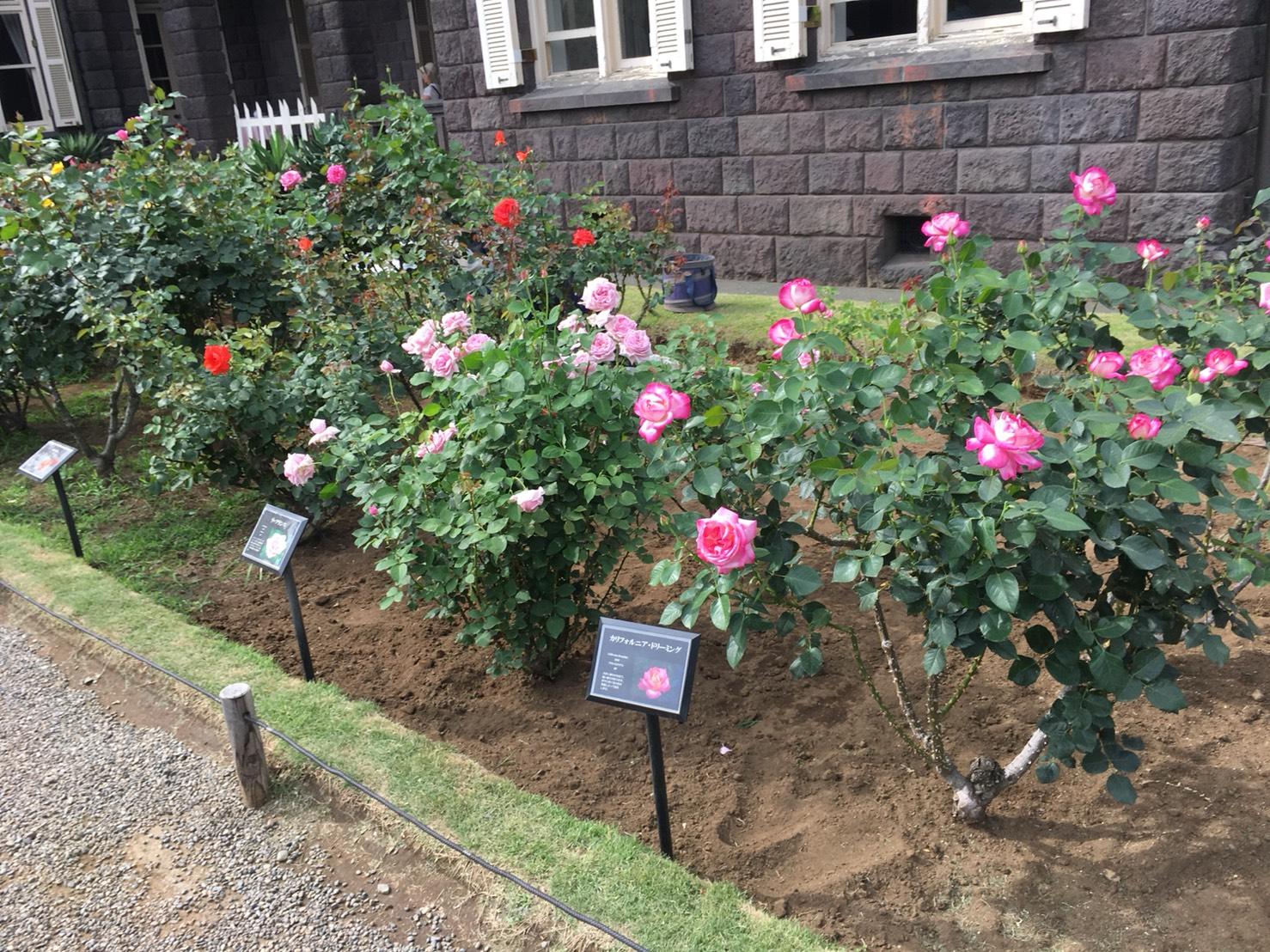 【上中里駅】バラが咲き誇る日英が混ざる庭園「旧古河庭園」のバラ園2