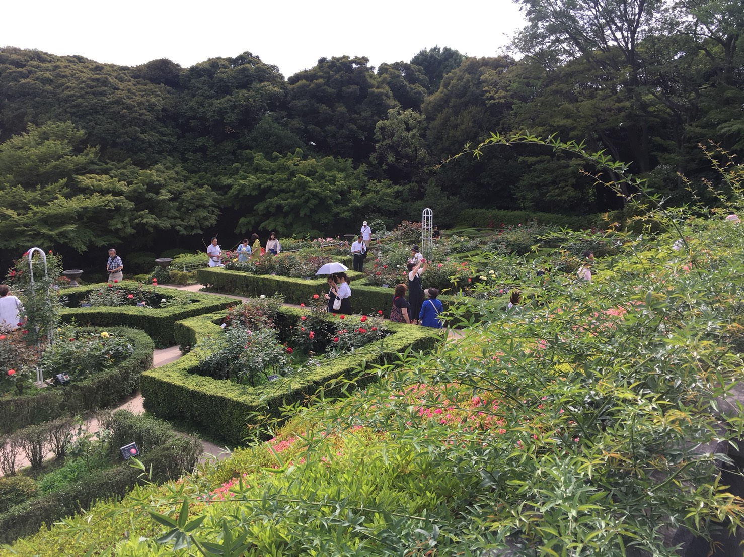 【上中里駅】バラが咲き誇る日英が混ざる庭園「旧古河庭園」のバラ園3