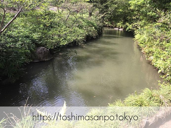 【駒込駅】歴史を学ぶいい日にしよう。和歌山市を模した江戸時代の庭園「六義園」で涼をとろう。の六義園の庭園内6